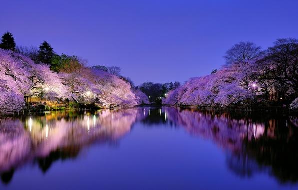 Picture the sky, trees, night, the city, cherry, lake, Park, Japan, Sakura, lighting, lights, blue, flowering, …