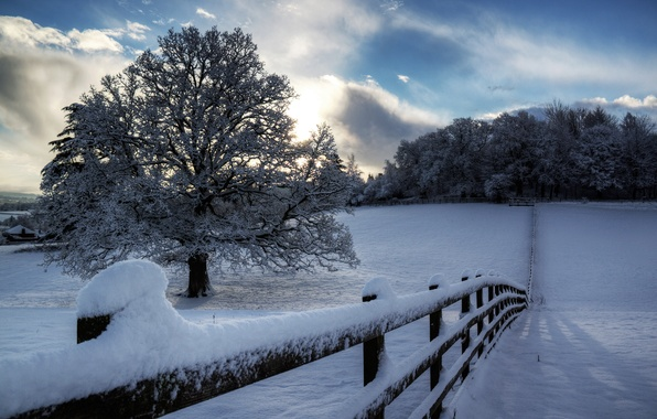Picture winter, the sky, clouds, snow, trees, nature, tree, the fence