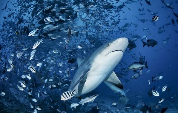 Picture sea, fish, shark