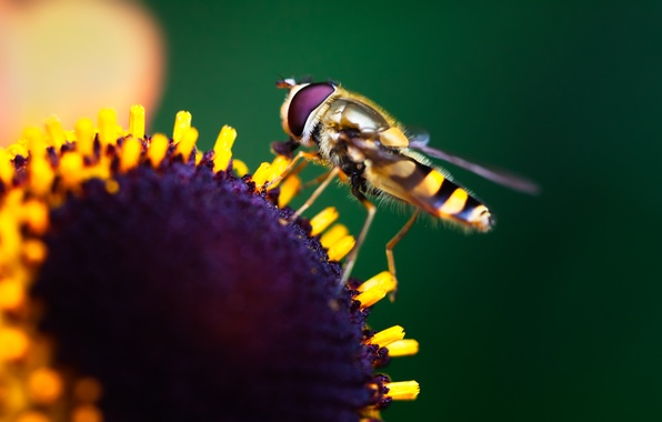 Picture flower, macro, paint, colors, insect, flower, macro, bokeh, bokeh, 2560x1600, insect