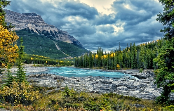 Picture forest, trees, mountains, river, Canada, Alberta, Canada, Jasper National Park, Athabasca River, Athabasca