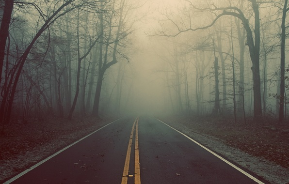 Picture road, forest, trees, fog, track