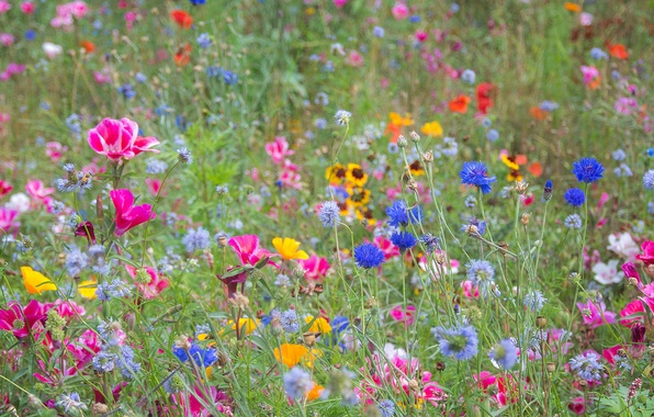Photo wallpaper field, summer, grass, flowers, meadow