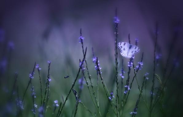 Picture field, purple, grass, macro, flowers, green, background, Butterfly, blur, lilac