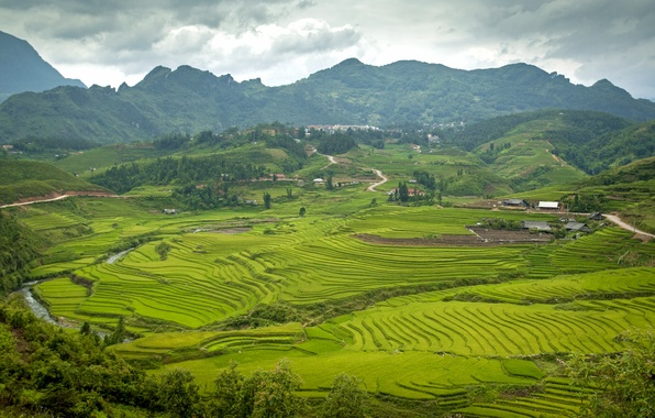 Picture summer, mountains, Asia, Vietnam, Mountain, Summer, Asia, rice fields
