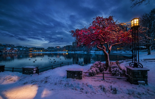 Picture winter, snow, lights, Norway, lantern, Stavanger, Rogaland, the evening twilight