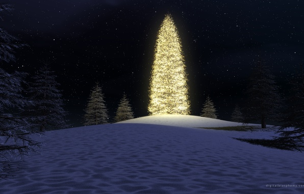 Picture forest, night, lights, tree