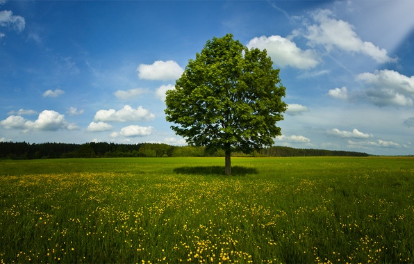Picture field, summer, grass, trees, nature, spring