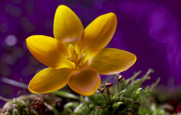Photo wallpaper bokeh, macro, flower, yellow