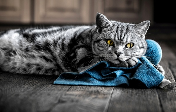 Picture cat, eyes, cat, grey, yellow, fabric, color, striped, blue