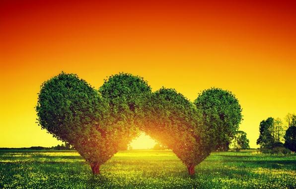Picture love, sunset, tree, green, heart, love, heart, sunset, tree