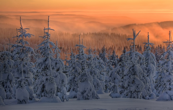 Picture winter, forest, snow, sunset, fog, tree, ate, twilight