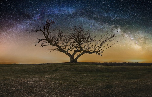 Picture the sky, stars, night, tree, the milky way
