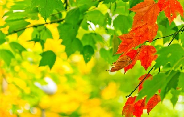 Picture autumn, leaves, light, nature, paint, colors, light, nature, autumn, leaves, bokeh, bokeh, 2560x1600