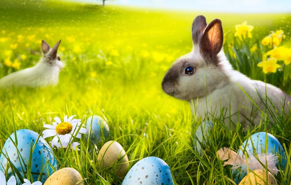 Image result for rabbit in spring