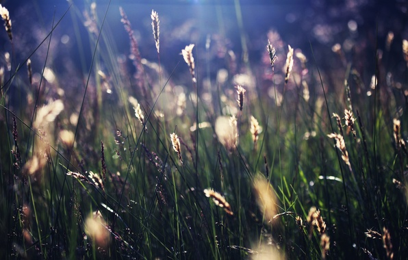 Picture summer, grass, the sun, rays, nature