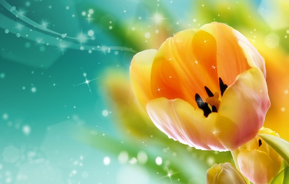 Picture petals, tulips, bokeh