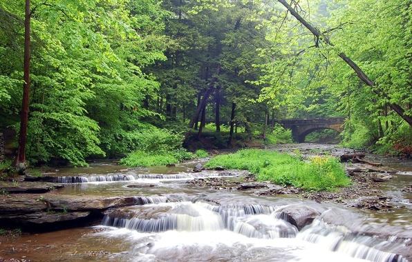 Picture Bridge, River, Forest