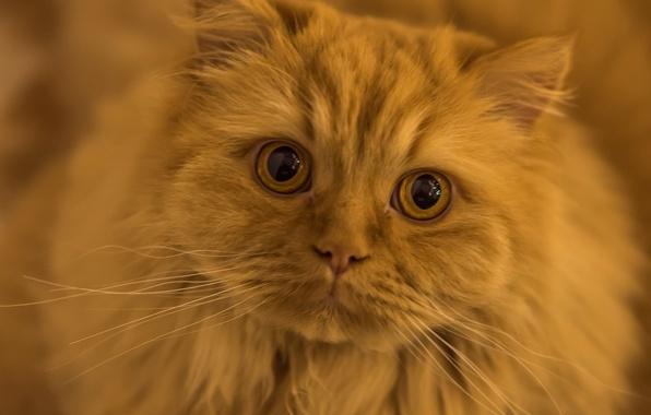 red cat eyes wallpaper - photo #23