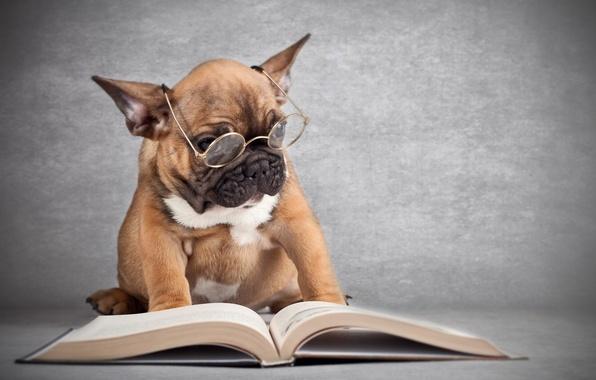 Picture dog, glasses, book