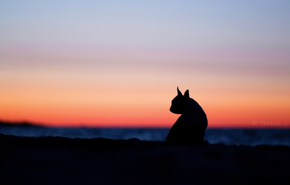 Picture cat, the sky, cats, sunset, nature, background, widescreen, Wallpaper, mood, silhouette, wallpaper, ears, widescreen, background, …