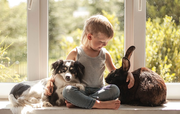 Picture mood, dog, boy, rabbit, window, friendship, friends, on the windowsill