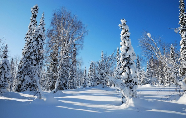 Picture winter, forest, the sky, snow, trees, tree, spruce, morning, frost, the snow