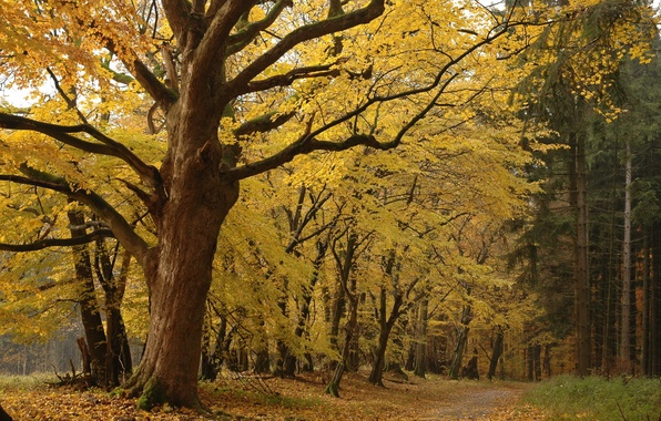 Picture forest, leaves, trees, Autumn, yellow, forest Park