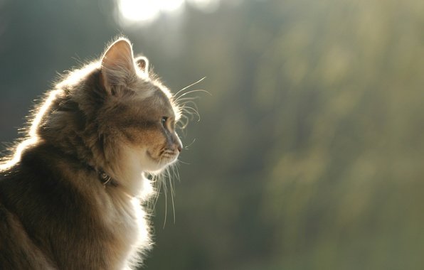 Picture cat, cat, look, smile, profile, brown
