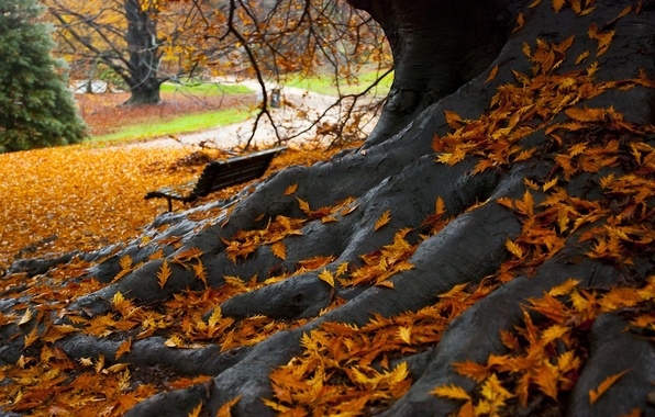 Picture leaves, Park, tree, Autumn, bench