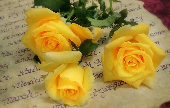 Три розы  картинки роз по три цветка вместе