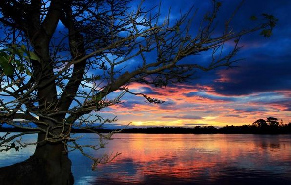 Picture landscape, sunset, lake, tree