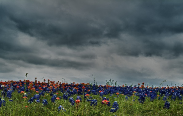 Picture the sky, color, clouds, flowers, nature, field, HDR, colors, hdr, beautiful, flower, sky, field, nature, …