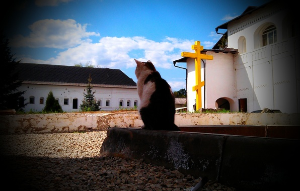 Photo wallpaper cross, the sky, Pensive cat