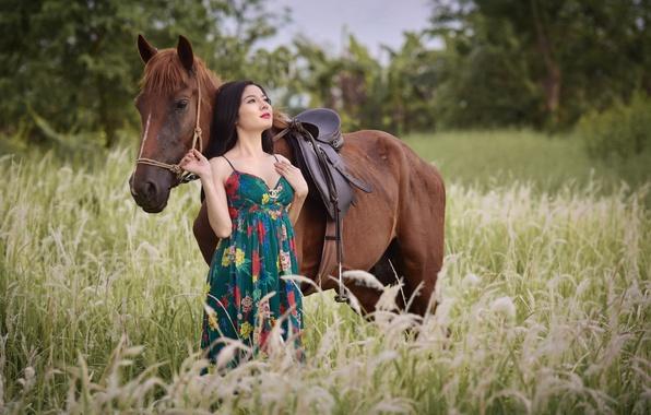Wallpaper Field, Summer, Face, Horse, Horse, Asian Images