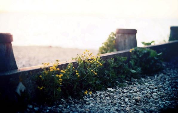 Picture macro, flowers, street, gravel