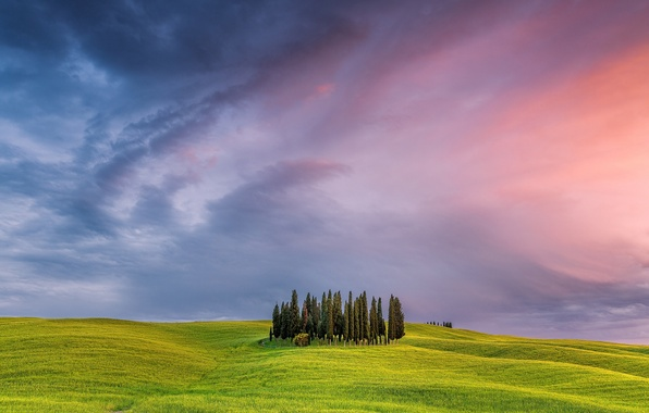 Picture the sky, tree, field, Italy, Tuscany
