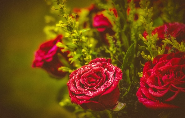 Picture drops, roses, bouquet, buds
