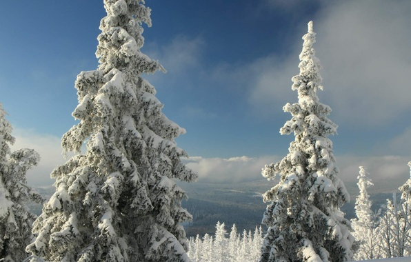 Picture winter, forest, snow, mountains, Czech Republic, Sumava, Bohemia, Prášily, Sumava national Park, mountain Polednik