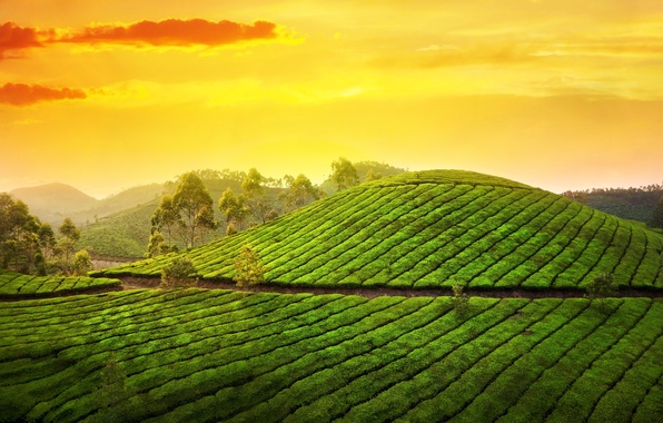Picture the sky, the sun, clouds, trees, landscape, nature, sunrise, hills, morning, India, Asia, plantation, tea, …