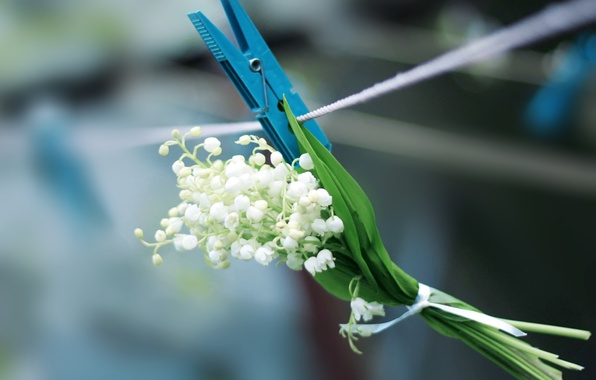 Picture white, flower, blue, spring, rope, clothespin, Landis