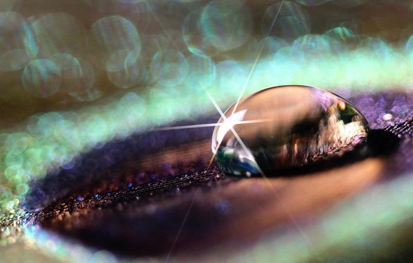 Picture purple, water, drops, macro, Rosa, background, pen, widescreen, Wallpaper, Shine, drop, wallpaper, widescreen, background, bokeh, …