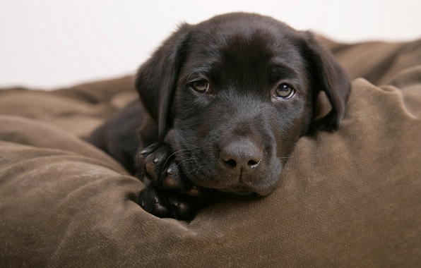 Picture puppy, face, doggie