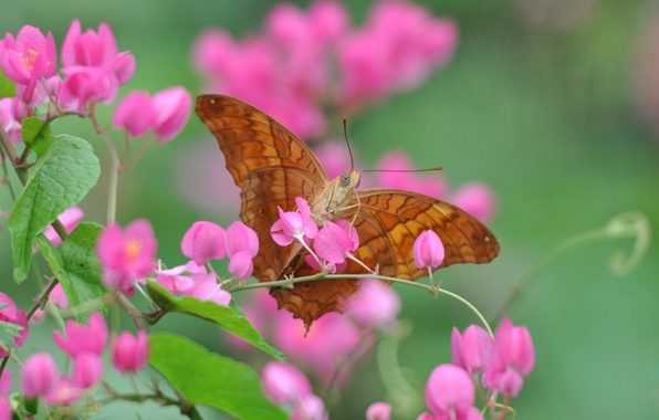 Picture flower, macro, butterfly, plant, petals, insect