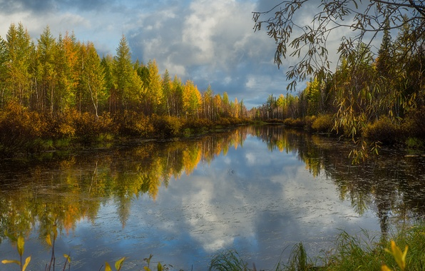 Picture autumn, forest, grass, water, clouds, trees, branches, lake, reflection, the bushes