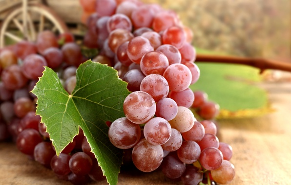 Picture autumn, red, sheet, berries, grapes, bunch