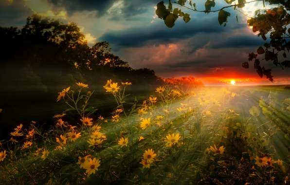 Picture field, the sky, rays, landscape, sunset, flowers, clouds, nature