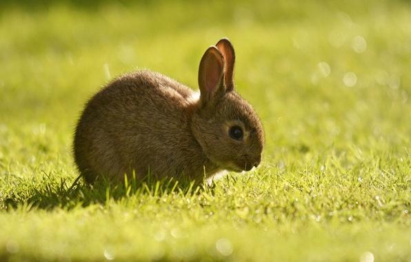 Picture grass, rabbit, cub
