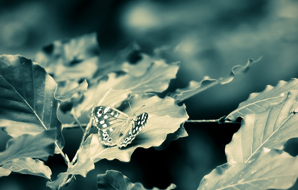Picture leaves, macro, branches, butterfly