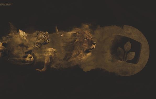 Picture animals, elephant, wolf, dust, Leo, bear, leopard, parrot, gorilla, emblem, desktopography